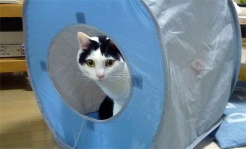 穴から顔出す猫
