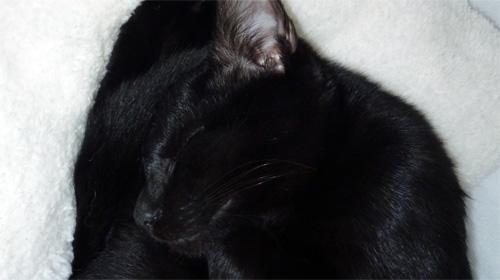 黒猫の寝顔