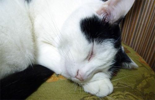 ちっぷの寝顔