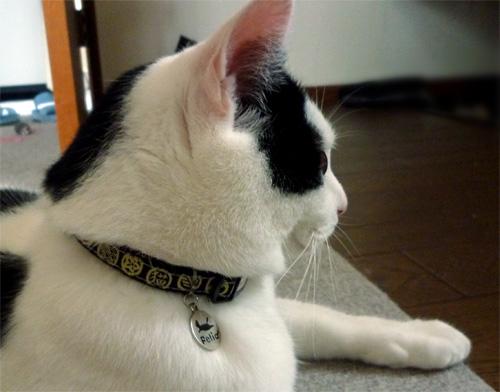 和柄のネコ首輪