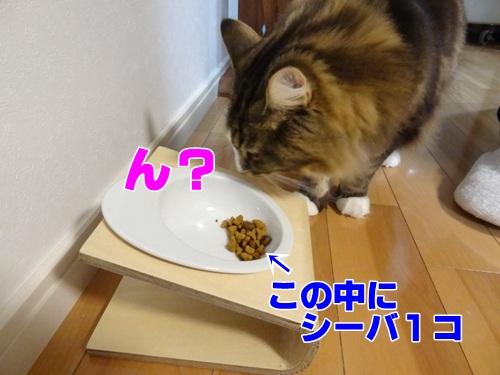 sheba4_text.jpg