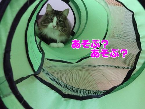 yohukashi3_text.jpg