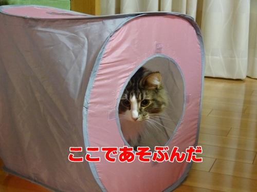 yohukashi4_text.jpg