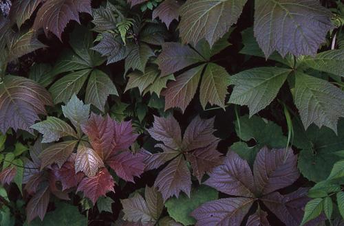 植物の造形1
