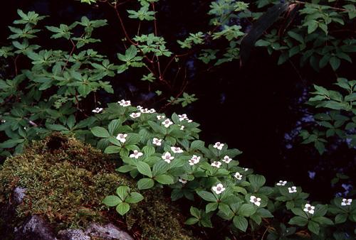 植物の造形2