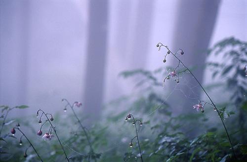 霧雨にうたれて