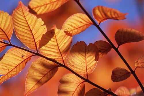 気まぐれな秋2