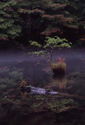 霧立つ沼2