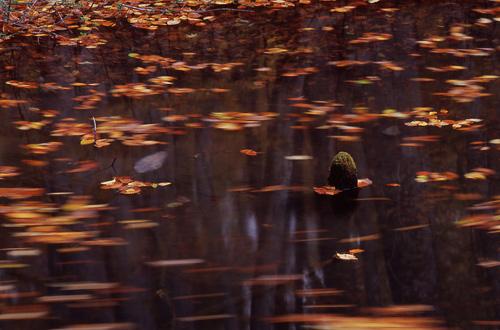 再びの蔦沼巡り2
