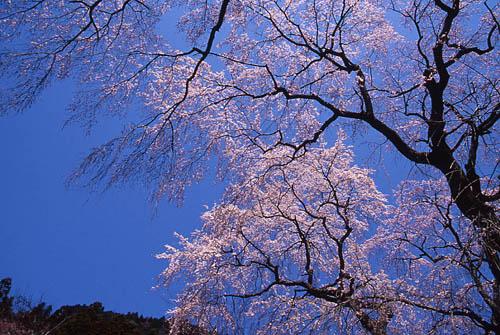 春よ来い1