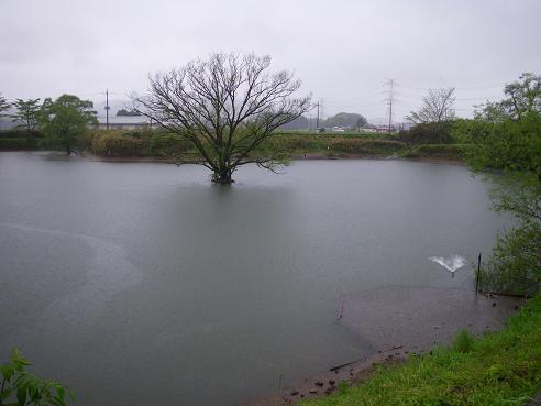 5月3日 大雨により大増水中の408Club