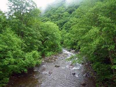 雑魚川橋の下流側