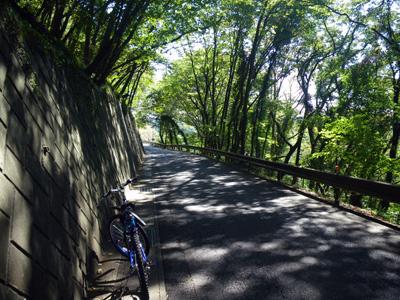 高津戸の東側道路