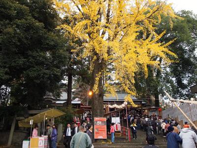 大銀杏も黄葉