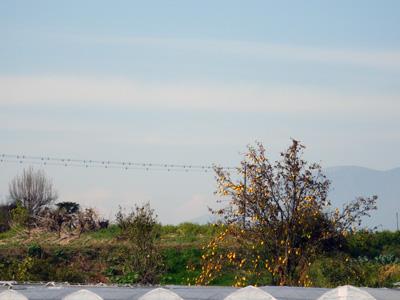 赤城山と花梨の木