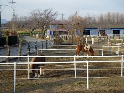 近所の牧場
