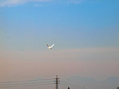 白鳥飛んだ