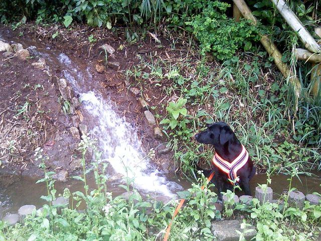公園池増水