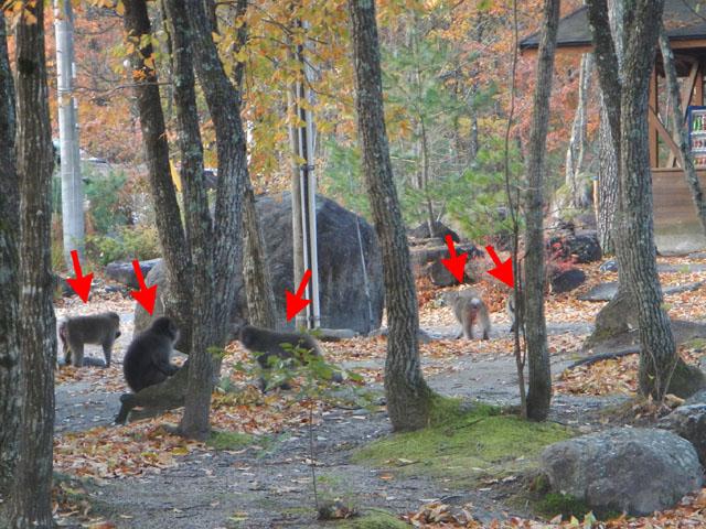 三景園 冬季キャンプ