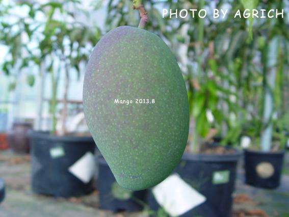 mango2013