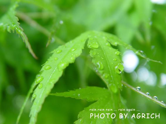rainrainrain