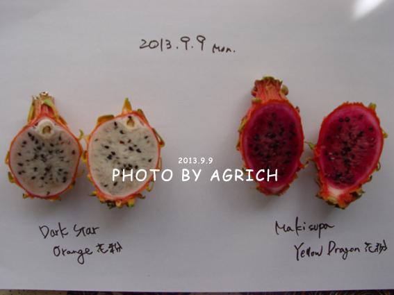 new orange2