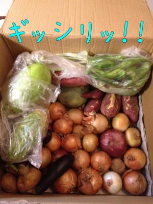 お野菜届く2