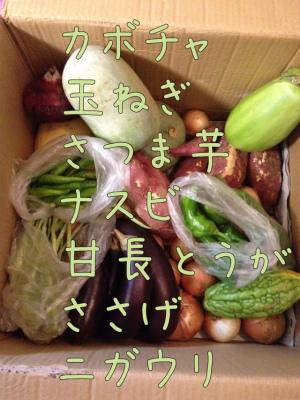 お野菜ずらり