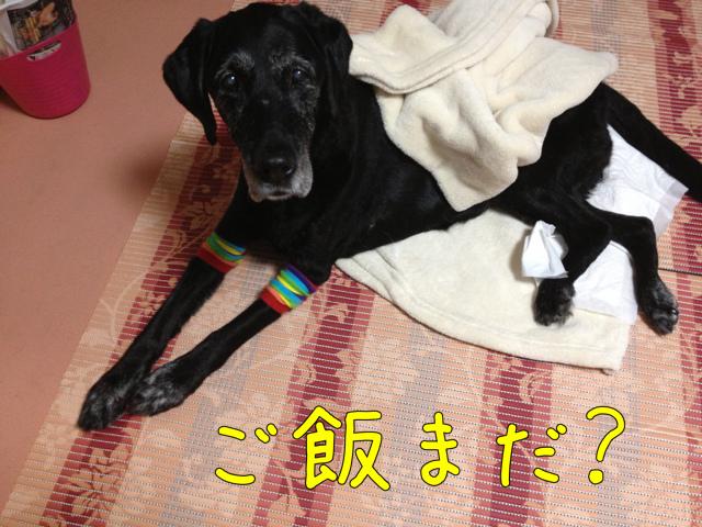 ごはんまだ? (6)