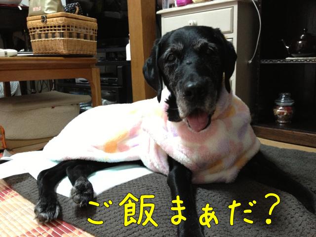 ごはんまだ? (10)