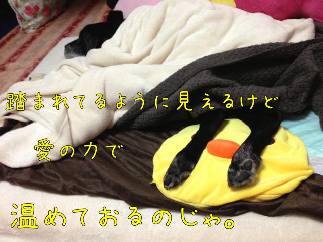 湯たんぽ (6)