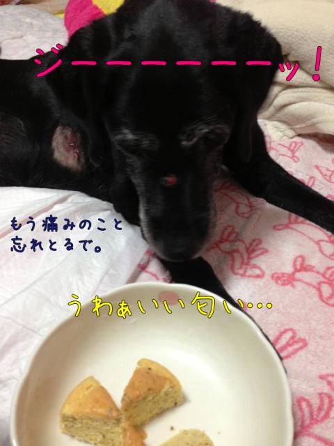 ぷちおぺ (1)