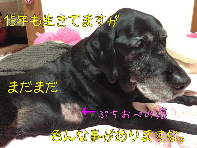 ぷちおぺ (5)