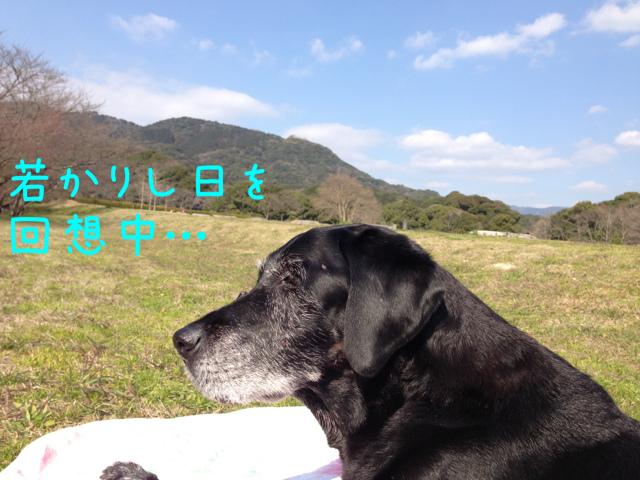 3月3日散歩 A (1)