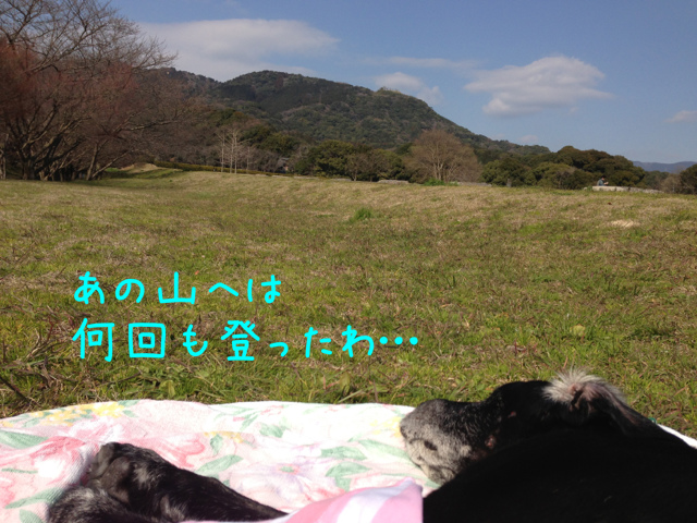 3月3日散歩 A (3)