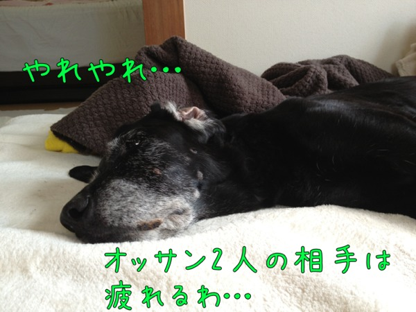 fc2blog_201210291756254b8.jpg
