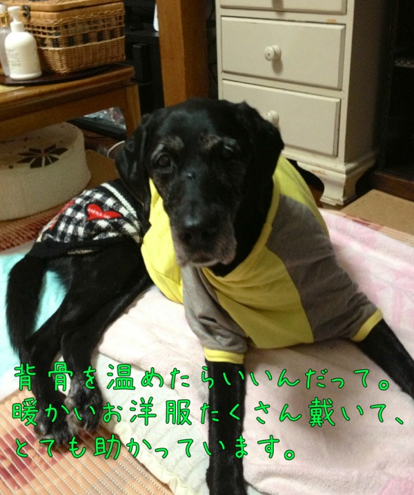 fc2blog_20121106141500641.jpg