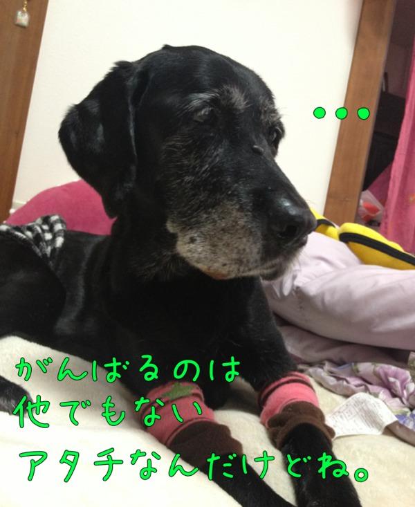 fc2blog_201211061426077dd.jpg