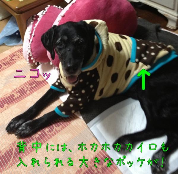 fc2blog_20121113135342a4b.jpg