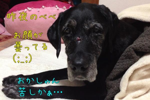 fc2blog_20130127133346960.jpg