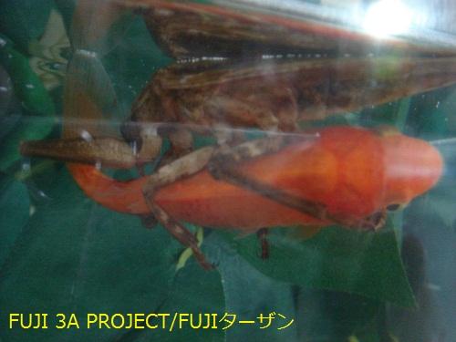 001_20120830112215.jpg