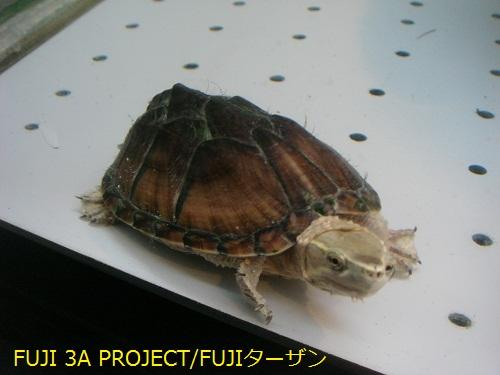 002_20120527112228.jpg