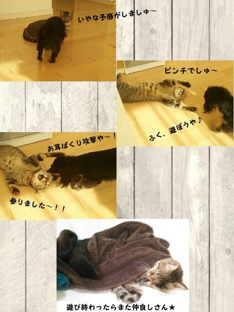 03_marofuku_0107.jpg
