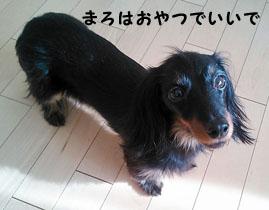 05_marofuku1_0110.jpg