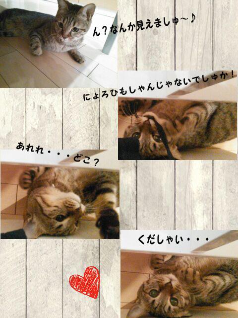 05_marofuku_0110.jpg