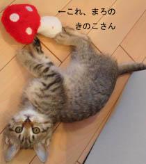 07_blog_fuku_baby3_120612.jpg