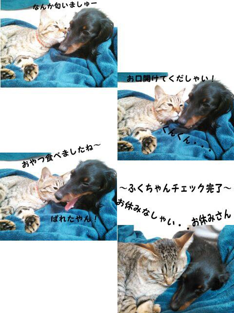 07_marofuku_0116.jpg