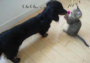 08_blog_marofuku2_120613.jpg