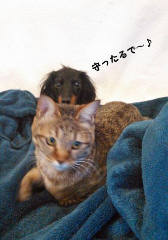 10_marofuku_0118.jpg