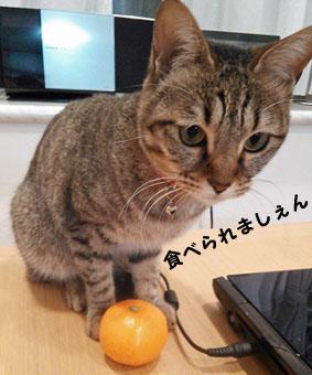 11_marofuku3_0123.jpg